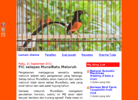 Burung murai batu websites and posts on burung murai batu