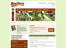 nucifere.com