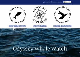 odysseywhalewatch.com