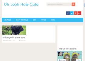 ohlookhowcute.com