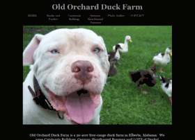 orchardfarmducks.com
