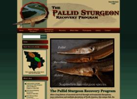 pallidsturgeon.org