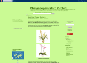 phalaenopsis-moth-orchid.blogspot.com