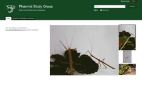 phasmid-study-group.org