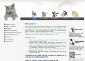 pisici-de-vanzare.ro