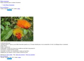 plantas-ornamentais.com