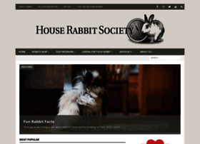rabbit.org