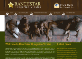 ranchstar-vizslas.co.uk