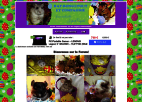 rat-rongetout-et-cie.forums-actifs.com