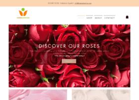 rosesamerica.com