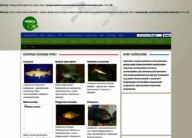 ryba.rolnicy.com