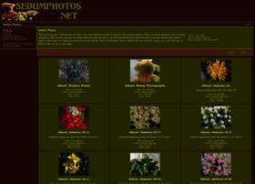 sedumphotos.net