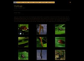 thaibugs.com