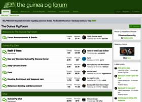 theguineapigforum.co.uk