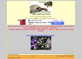 tortues-terrestres.forumactif.com