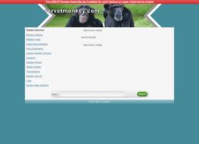 vervetmonkey.com