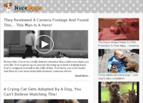 video-19.nicedogs.tv