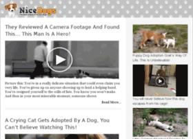 video-2.nicedogs.tv