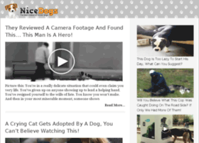 video-26.nicedogs.tv