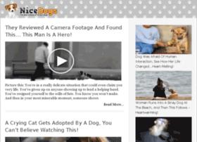 video-27.nicedogs.tv