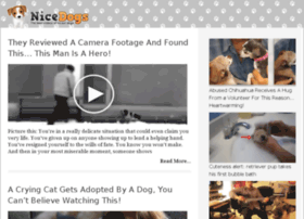 video-29.nicedogs.tv