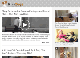 video-32.nicedogs.tv