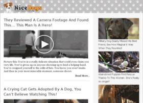 video-34.nicedogs.tv