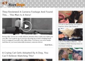 video-36.nicedogs.tv
