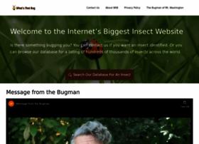 whatsthatbug.com