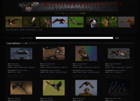 wildlife-photos.net
