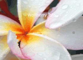 wolfberry.info